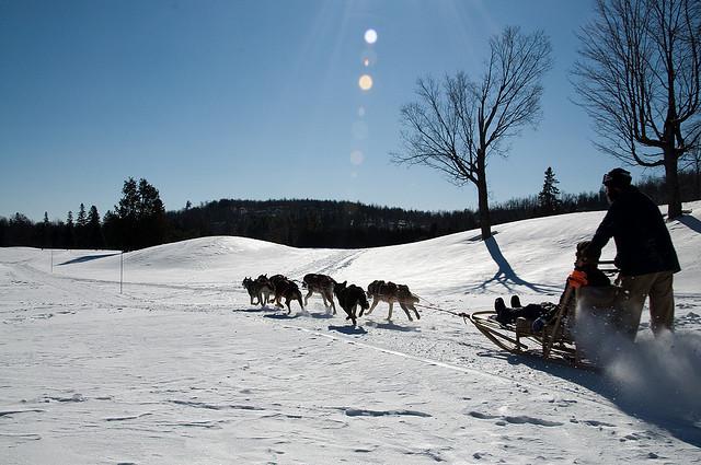 Sulla neve con Fido: sleddog, dove e come