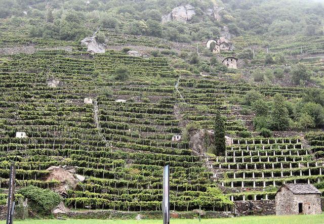 """Nel vino """"eroico"""" di montagna l'Italia vince in qualità e quantità"""
